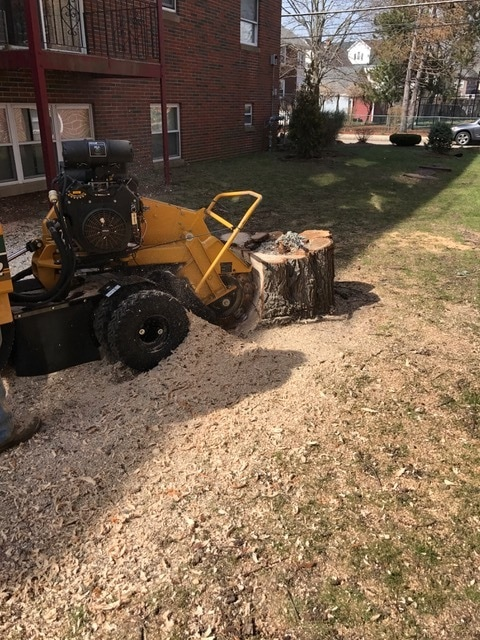 Stump Grinding Wakefield, MA